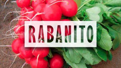 Cultivo de Rabanito - Huerta de cero