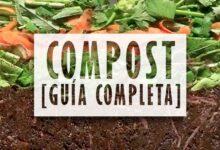 Compost, guia completa