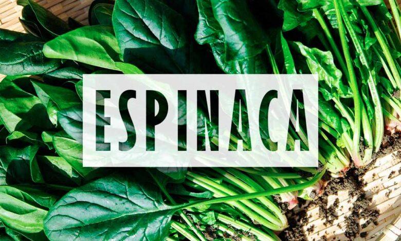 Cultivo espinaca