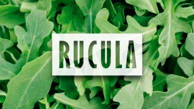 Cultivo de Rucula