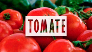 Cultivo de Tomate